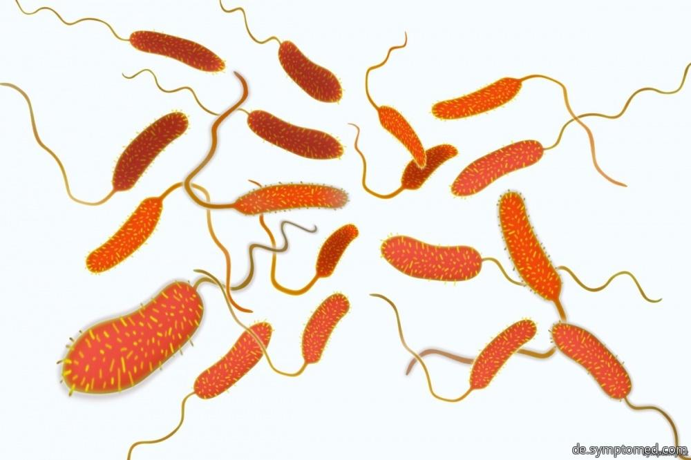 Bakterien Vibrio cholerae - Erreger der Cholera