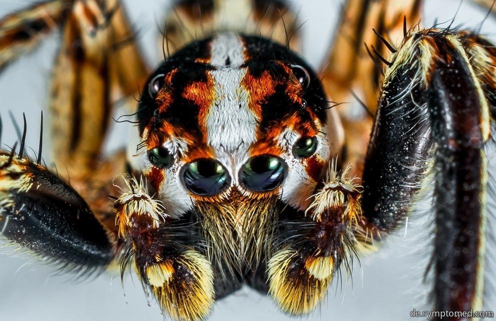 Eine giftige Spinne