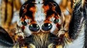 Giftige Spinnen
