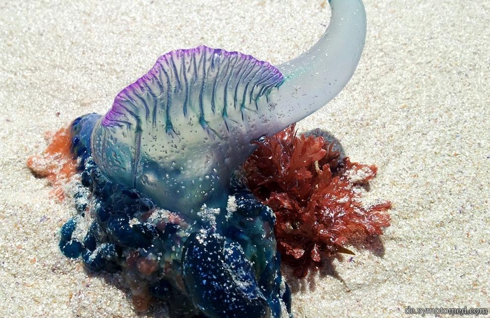 Giftige Tiere im Meer
