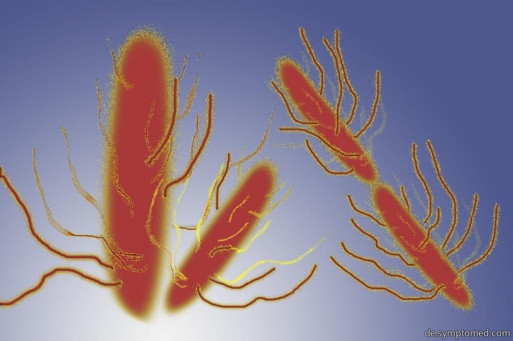 Bakterie Salmonelle