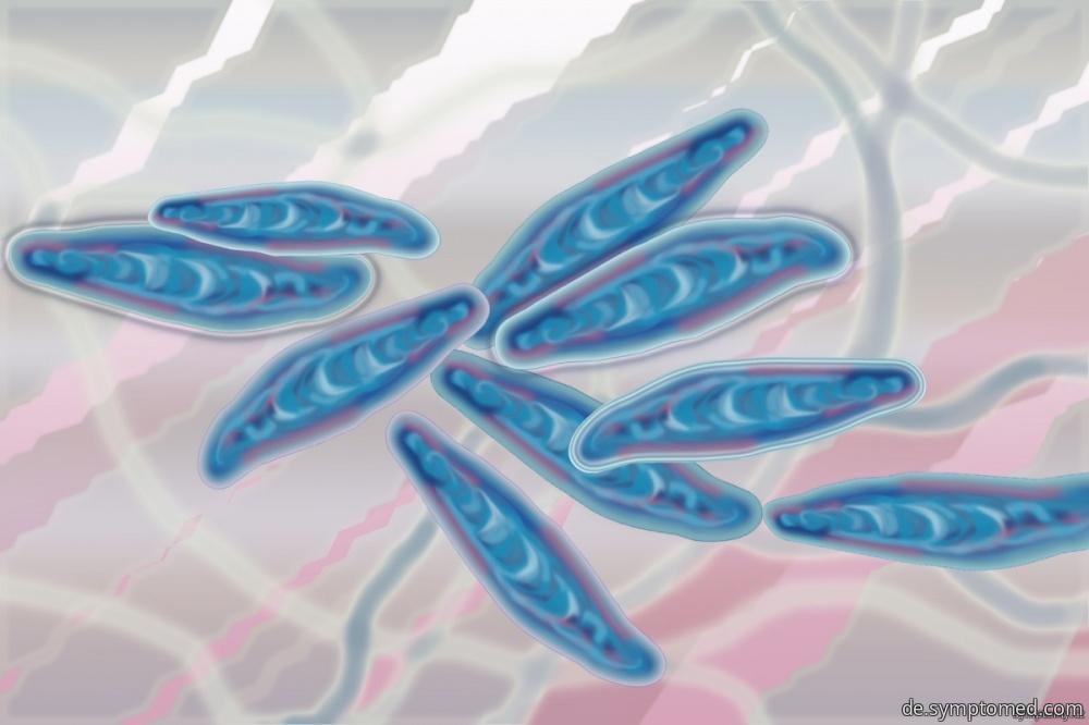 Dermatophyten - mikroskopische filamentöse Pilze