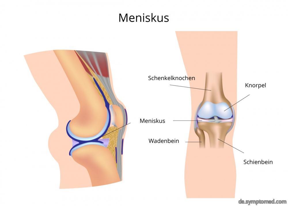 Beschreibung des Kniegelenks