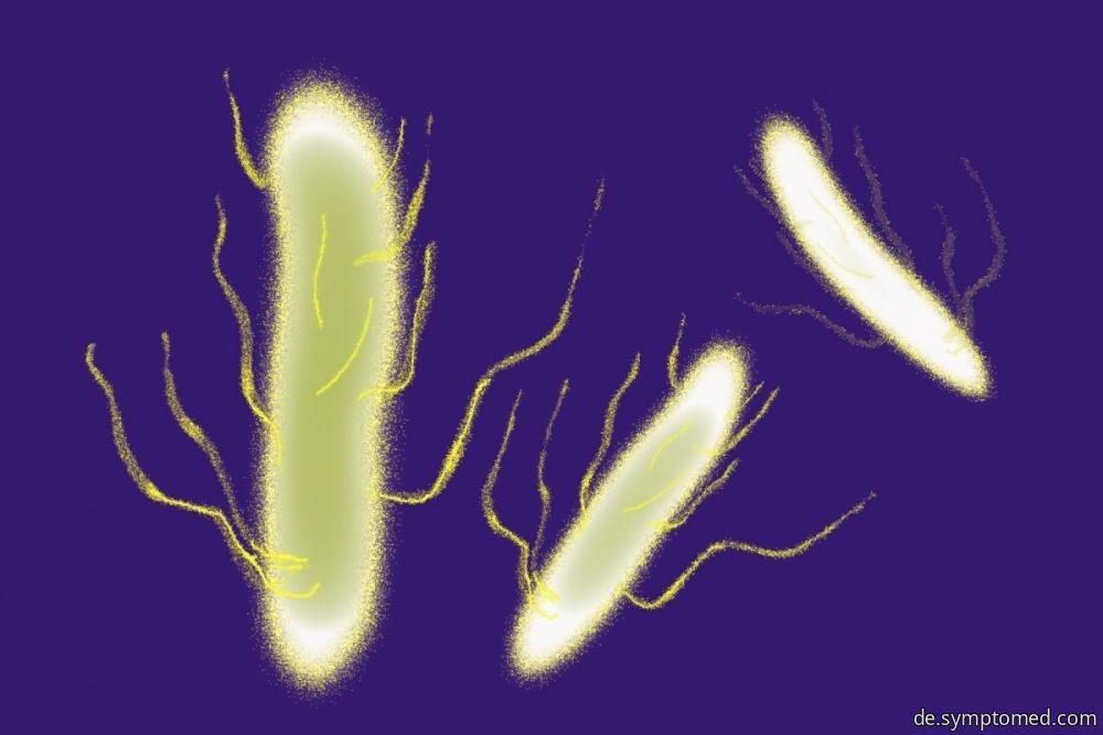 Bakterie Salmonella Enteritidi
