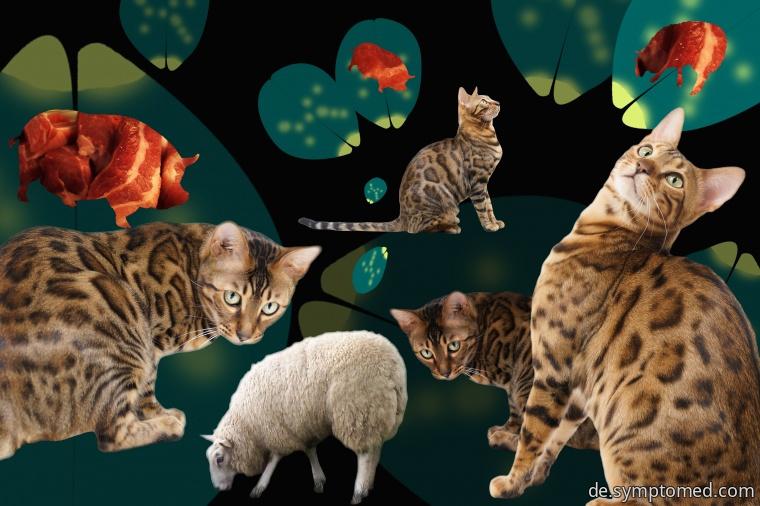 Die Katzenartigen - die häufigsten Überträger von Toxoplasmose