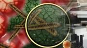 Mykoplasmeninfektion