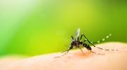Allergie auf Insektenstich