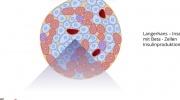 Prozesse in der Speicheldrüse