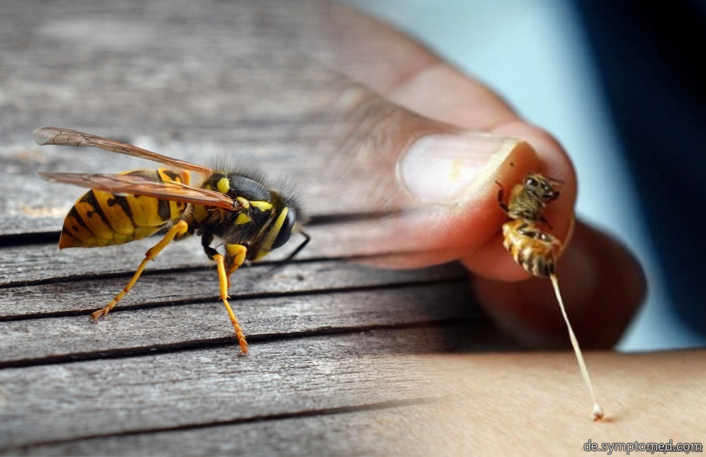 Giftiges Insekt